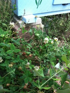 Clover next to BnB2.  Can you find the 4-leafed clover in the picture?