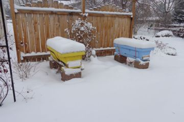 snow covered hives