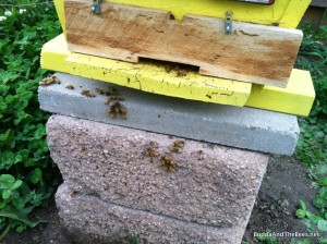 clustering bees