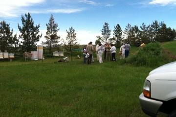 Country apiary