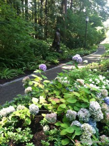 Hydrangeas and Sacagawea, Lewis & Clark College.