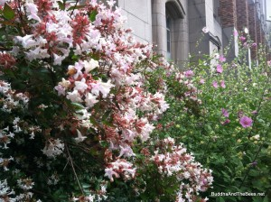 Flowering shrubs with bees - University of Washington
