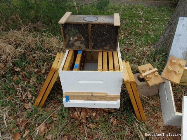 Left Hand Hive ready for install