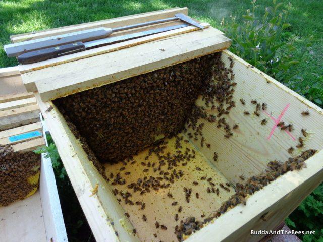 Moving mini hive to bigger quarters