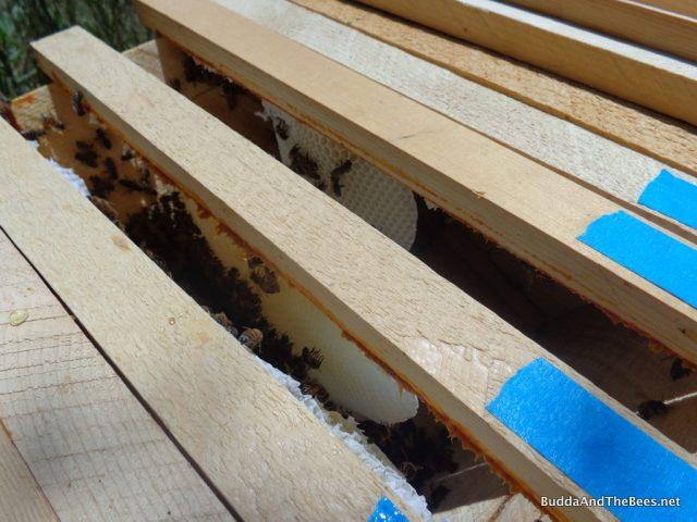 New white comb - Sarah's hive