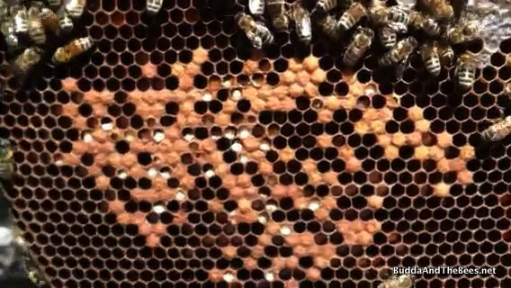 PMS in the hive