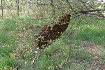 Swarm a foot off the ground
