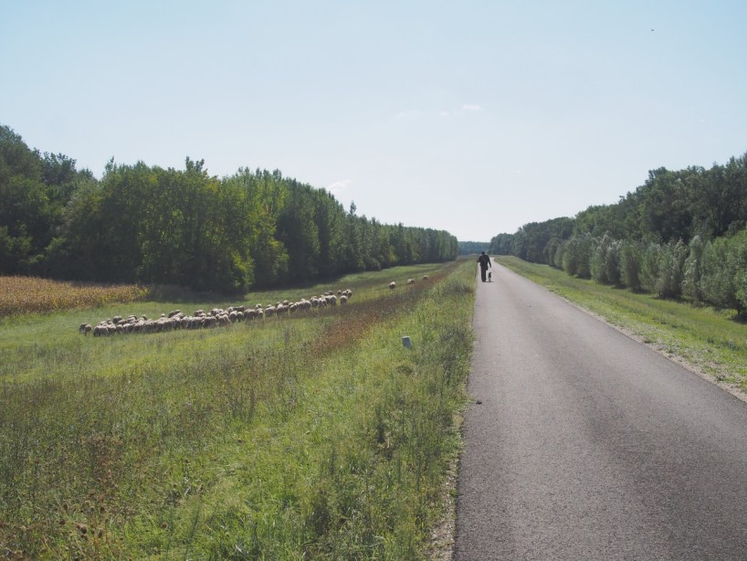 DAY 04… Mohacs to Apatin