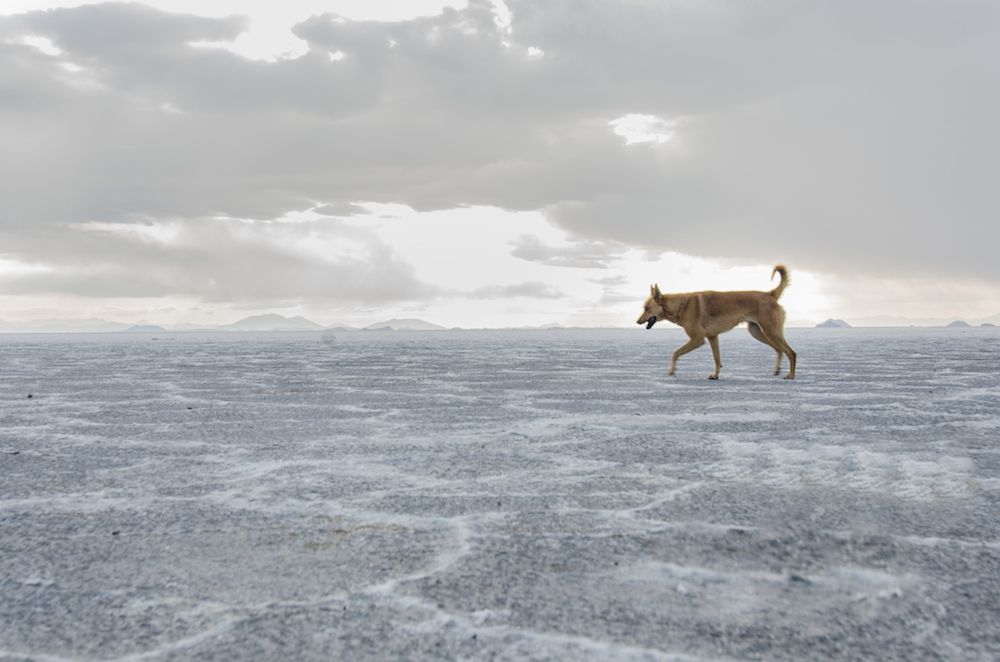 uyuni-salt-flats-bolivia-Incahuasi-dogs-airstream-camping-cox-and-kings-jenny-adams-freelance-writer-daniel-scheffler-lanee-lee-voyage-vixens-buddha-drinks-fanta-3213
