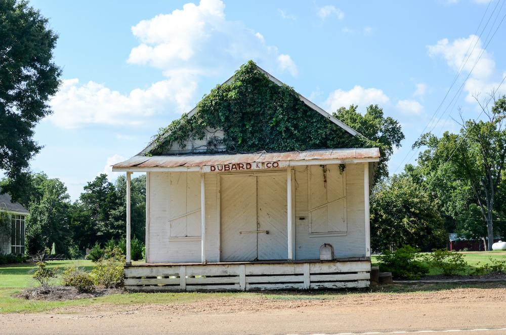 Kudzu Roof, Roadside shack, Greenwood Mississippi, photo by Jenny Adams-5124