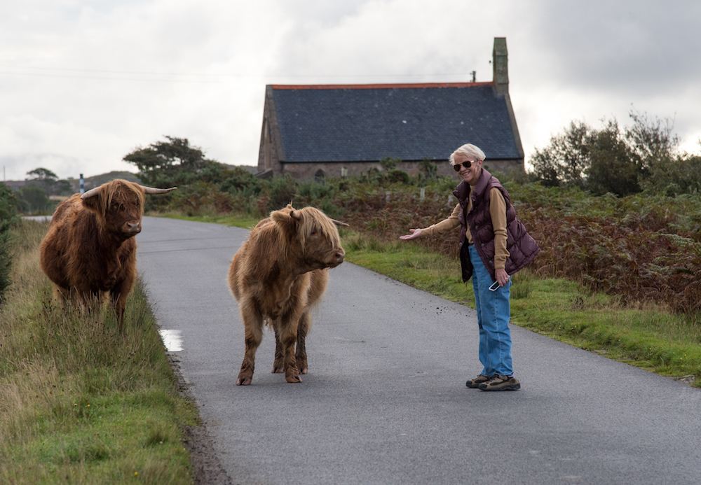highland-cattle-scotland-photos-feeding-driving-shaggy-cute-isle-of-mull-buddha-drinks-fanta-jenny-adams