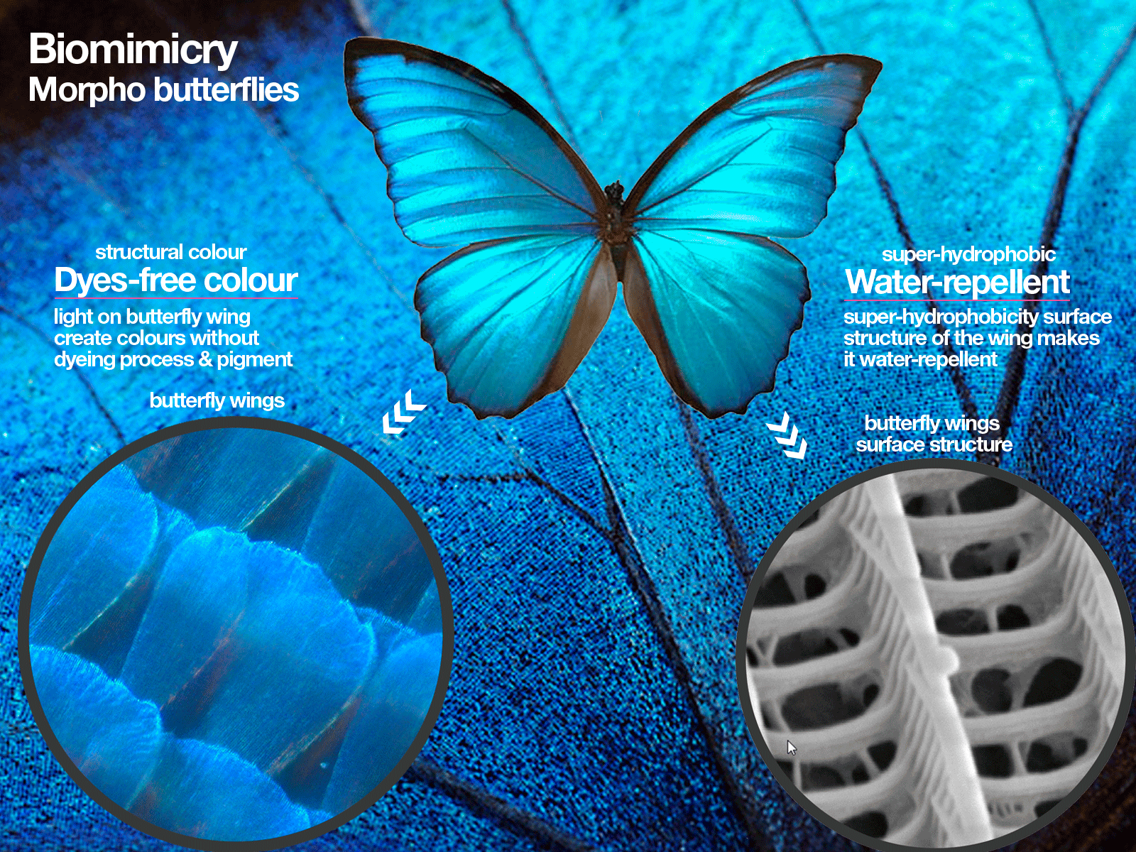 biomimicry-butterfly-colours