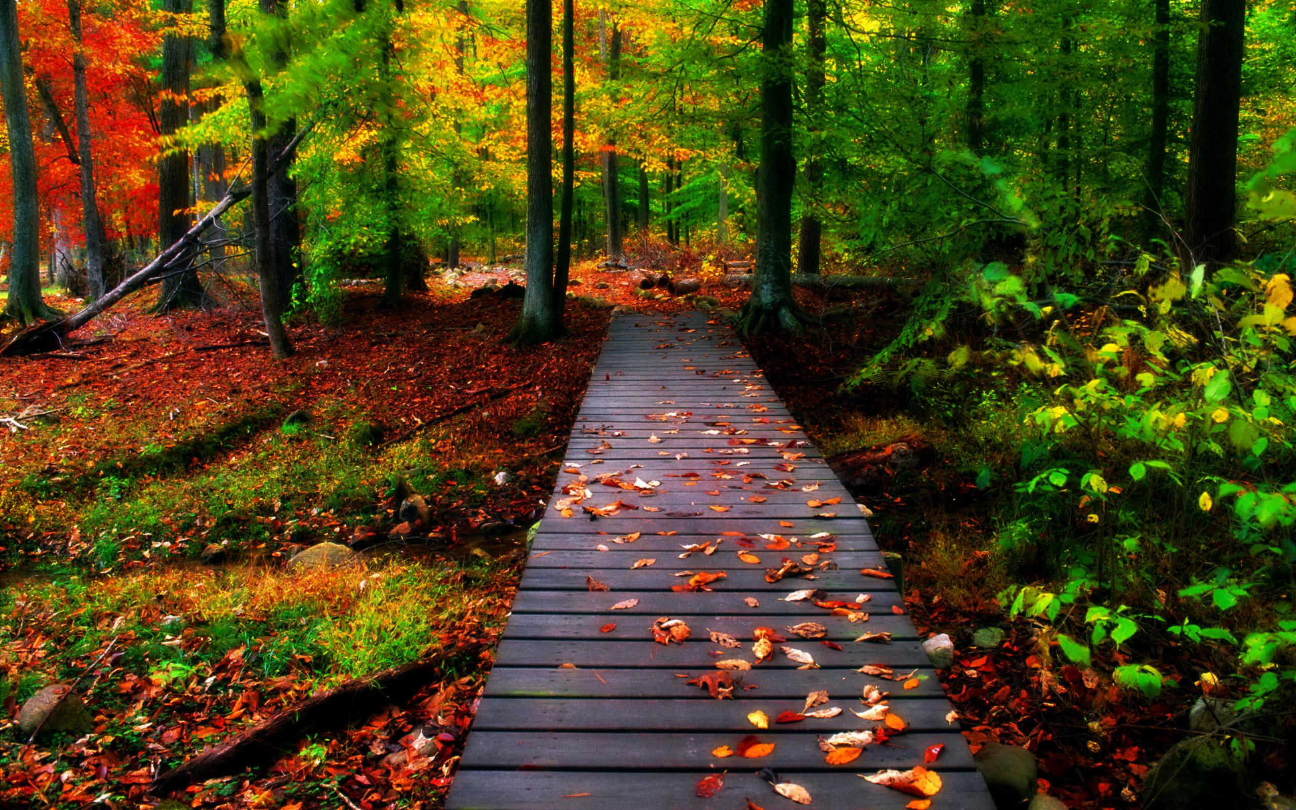 enjoy nature create a