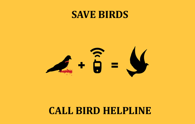 Save Birds BuddyBits Campaign