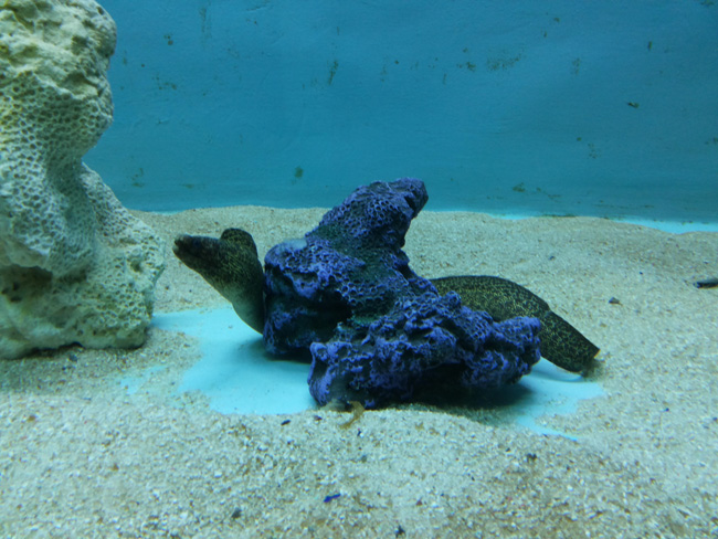 Surat Aquarium Photo 10