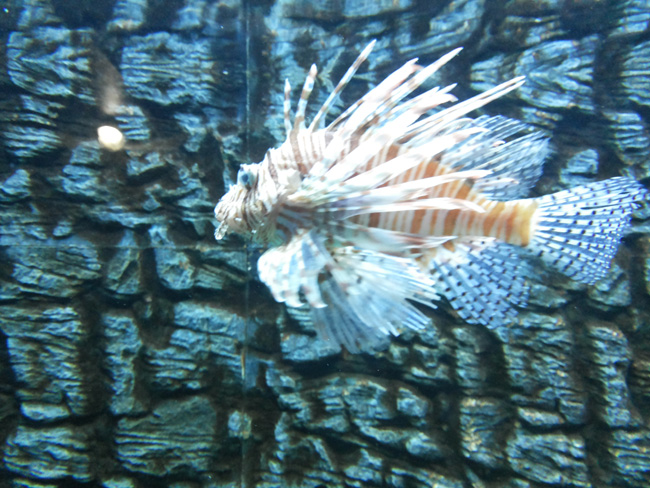 Surat Aquarium Photo 13