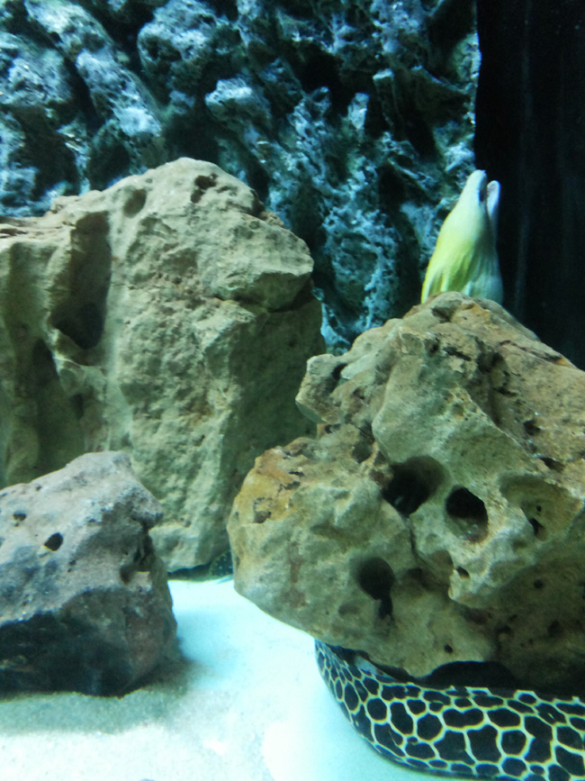 Surat Aquarium Photo 7