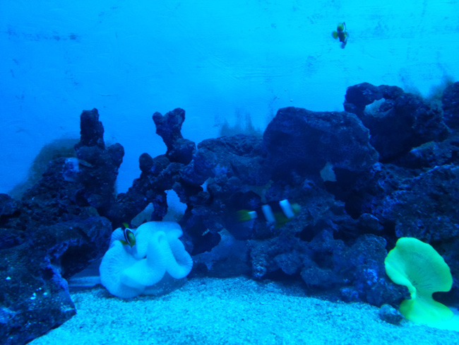 Surat Aquarium Photo 9