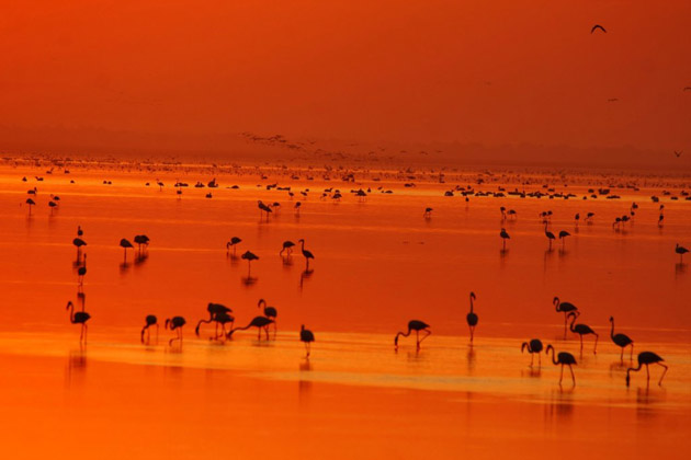 Flamingoes - 5 Reasons Why Rann of Kutch Should be your Next Holiday Destination