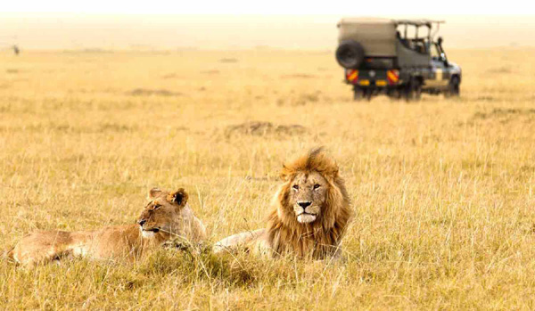 Gir National Park Top 10 Most Family Friendly Vacation Spots in India