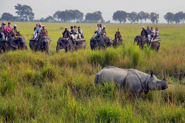 Kaziranga National Park Top 10 Most Family Friendly Vacation Spots in India