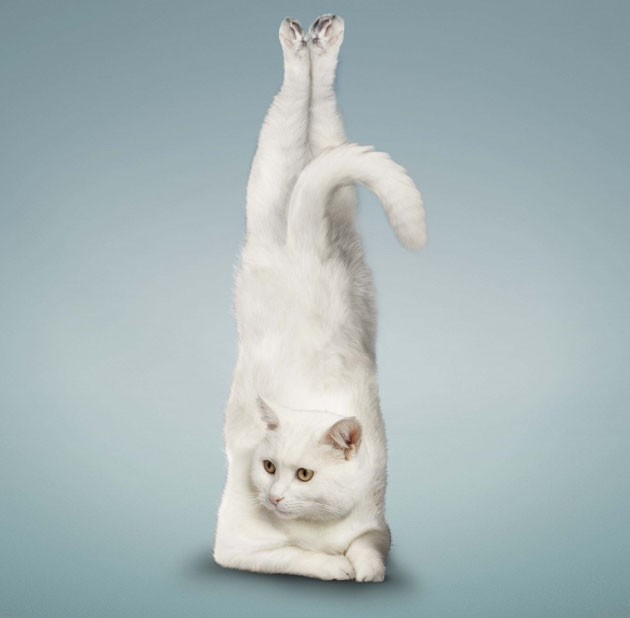 These Animals trying Yoga is the Funniest Thing