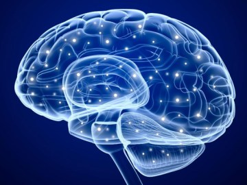 21 Amazing Facts about Brain