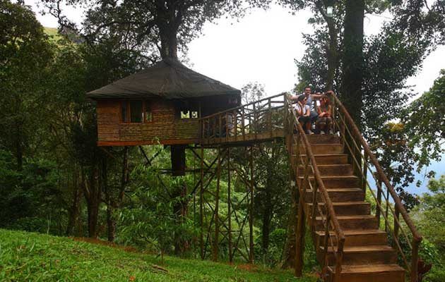 Treehouse in Kerala