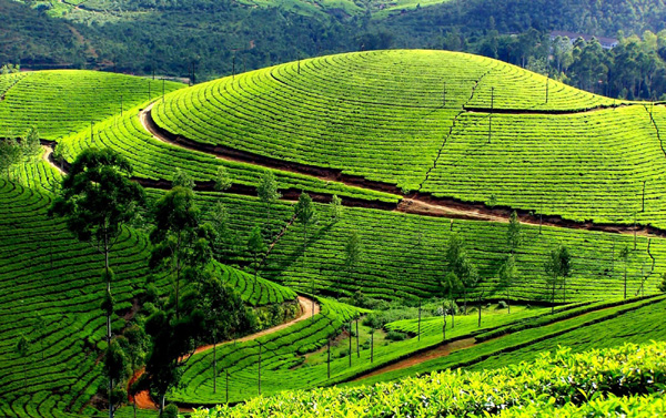 Ooty - 10 Best Indian Places To Visit During Summer