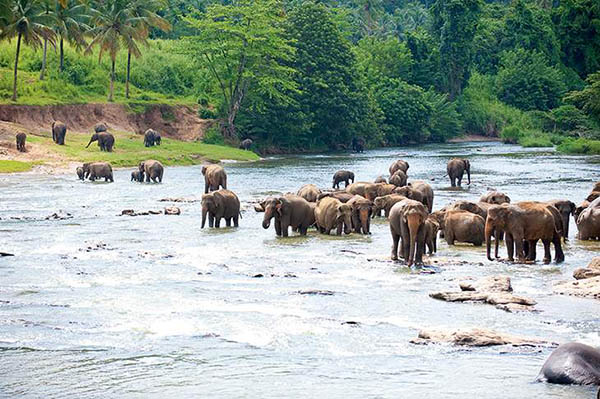 Jungle Book Things to do in Goa