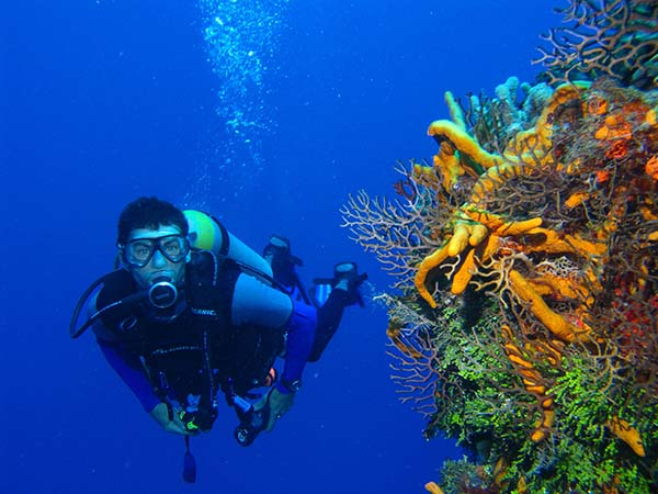 Scuba Diving Things to do in Goa