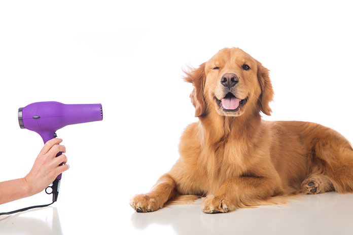 Everything You Need To Know About Pet Grooming