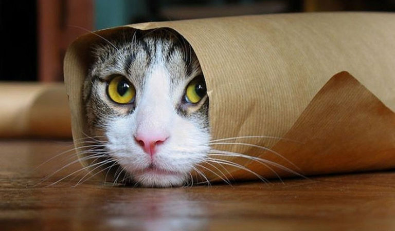 15 Undeniable Facts Why Cats Are Better Than Dogs!