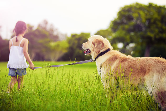 5 Ways to Take Care of Your Furry Friends this Diwali