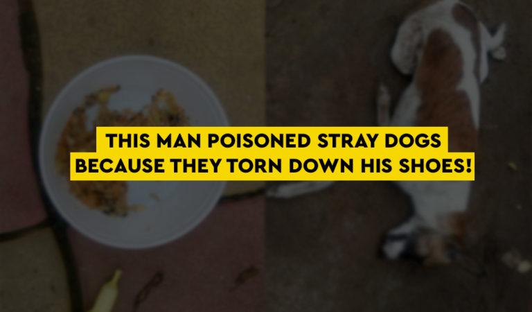 This Man Poisoned Stray Dogs Because They Torn Down His Shoes