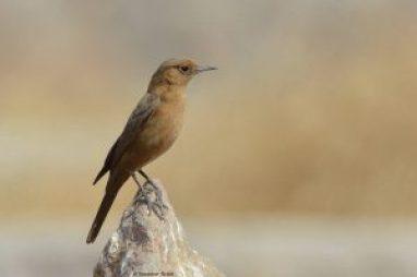bird-watching-in-khonoma
