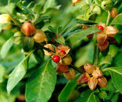 , 5 SUPERFOODS FOR THYROID DISORDERS!!