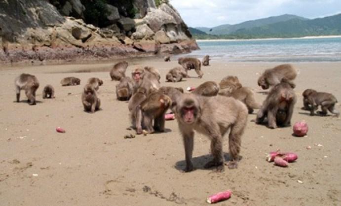100 monkey effect