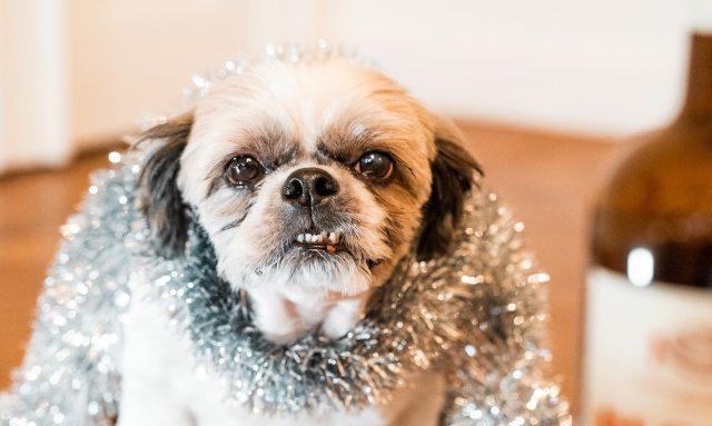 Så firar du ett hundvänligt nyår