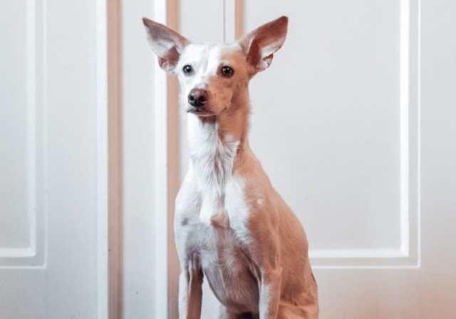 10 snabba frågor med vår nya kontorshund Cocos