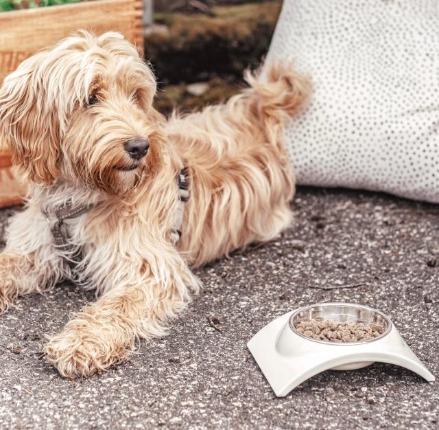 Varför är prebiotika bra för min hund?