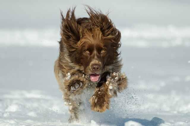 Så tar du hand om hunden i vinter