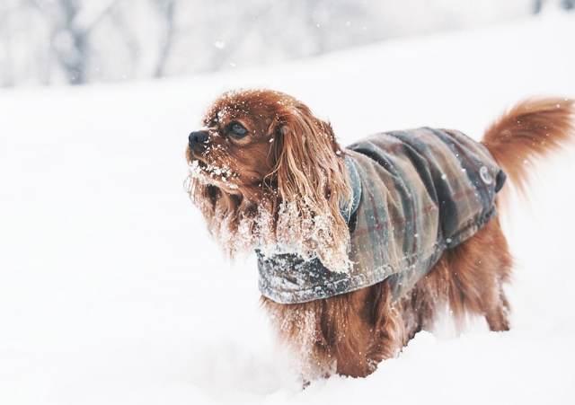 Buddy Pet Foods | 10 julklappstips till din hund | Hundtäcke