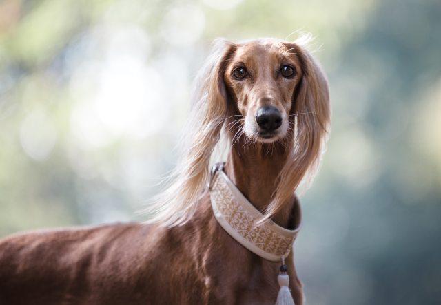 Buddy Pet Foods | 10 julklappstips till din hund | Hundhalsband