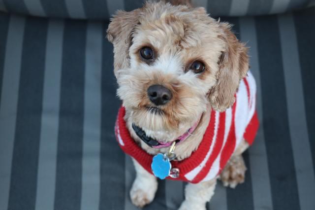 Buddy Pet Foods | 10 julklappstips till din hund | Hundtröja