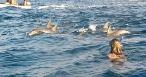 One day Dolphin Tours in Zanzibar