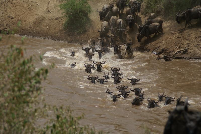 10 Day Budget Safari Wildebeest Migration and Zanzibar