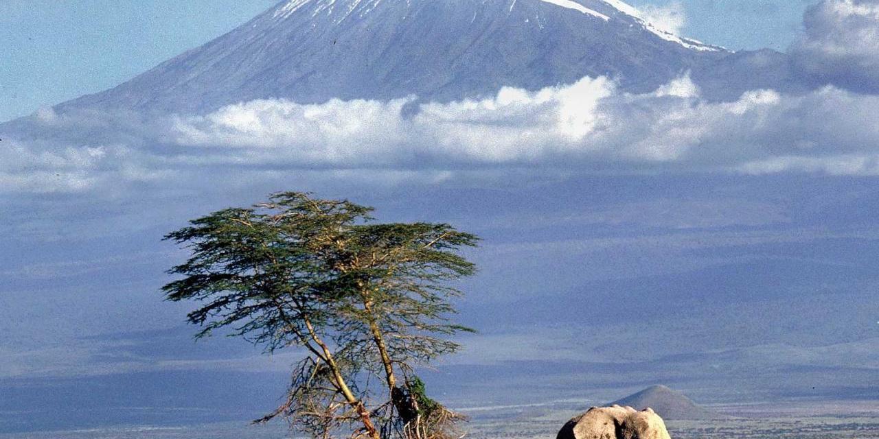 Kilimanjaro Climbing Shira Route 8 Days