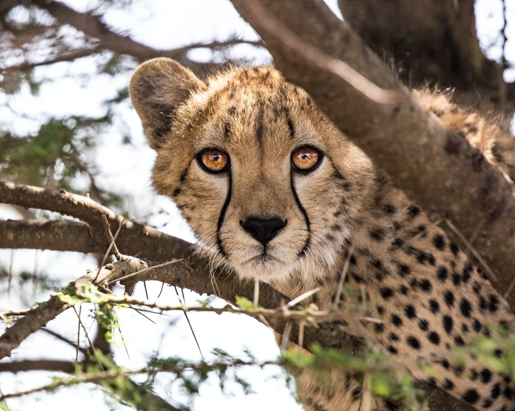 EXPLORING THE SIGHTS & DELIGHTS OF A SOUTH AFRICAN SAFARI