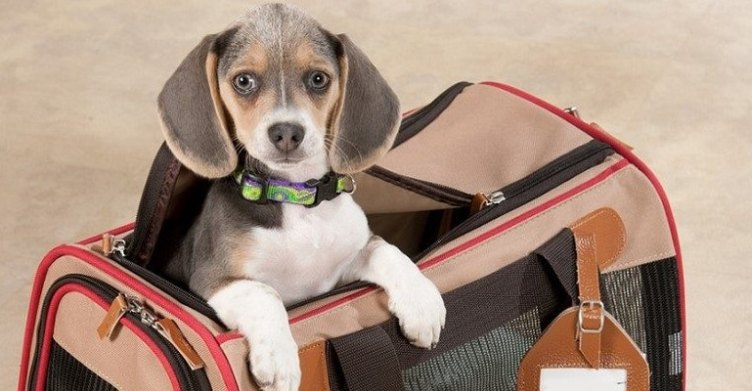 exclusive tips while traveling with pets